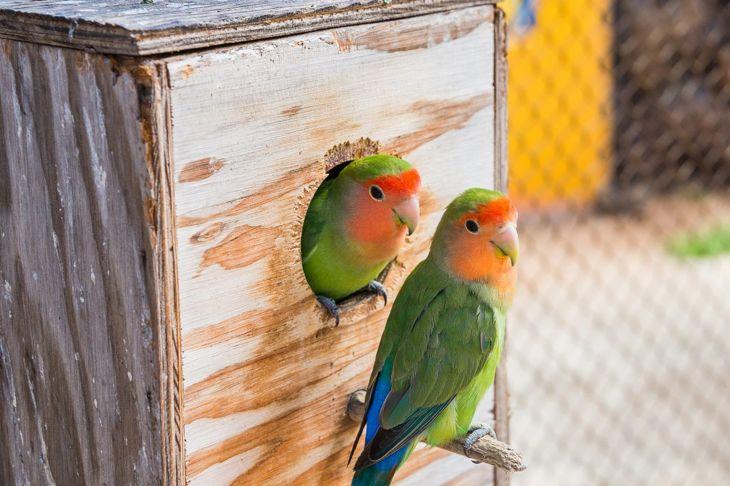 playing parakeets