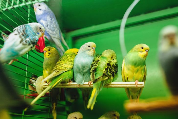 happy parakeets