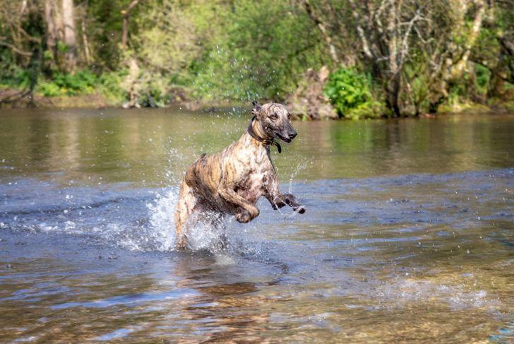 vigorous exercise muscle tone canine