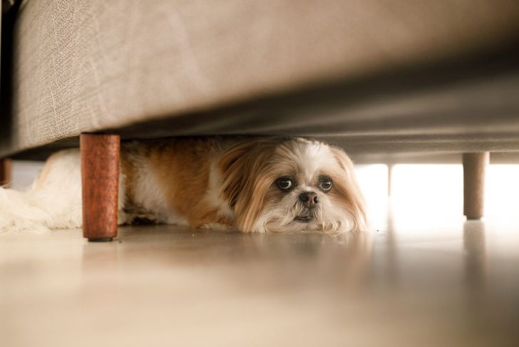 Scared dog hiding