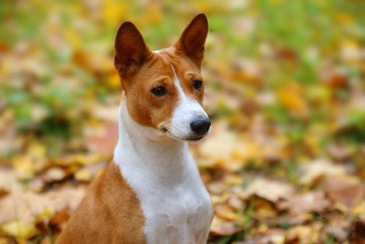 facial expression comical endearing dog