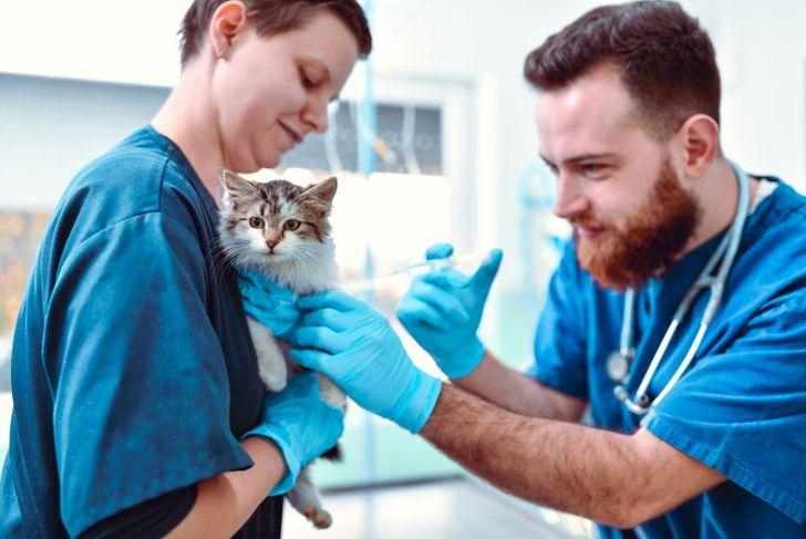Veterinarian giving cat vaccine