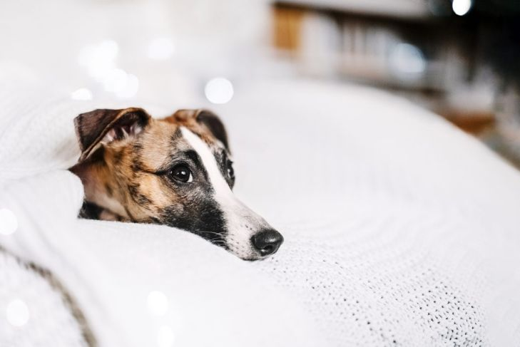 burrow bed cozy whippet