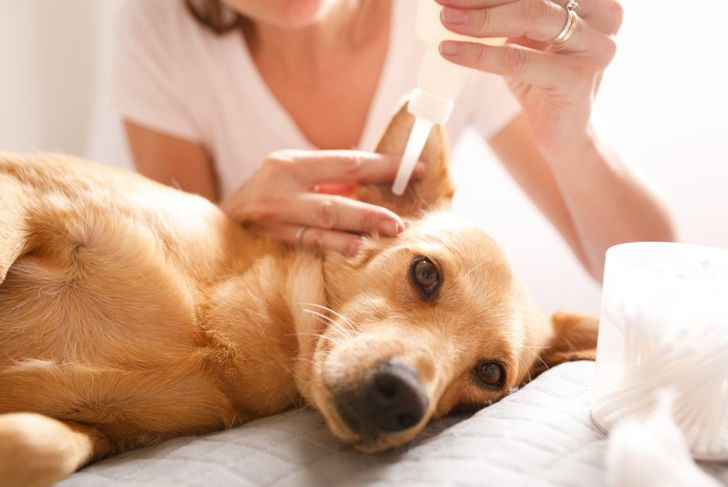 Cleaning solution for your dog's ear.