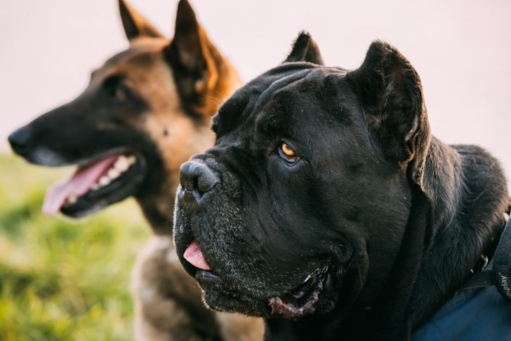 protective instincts prey drive canine