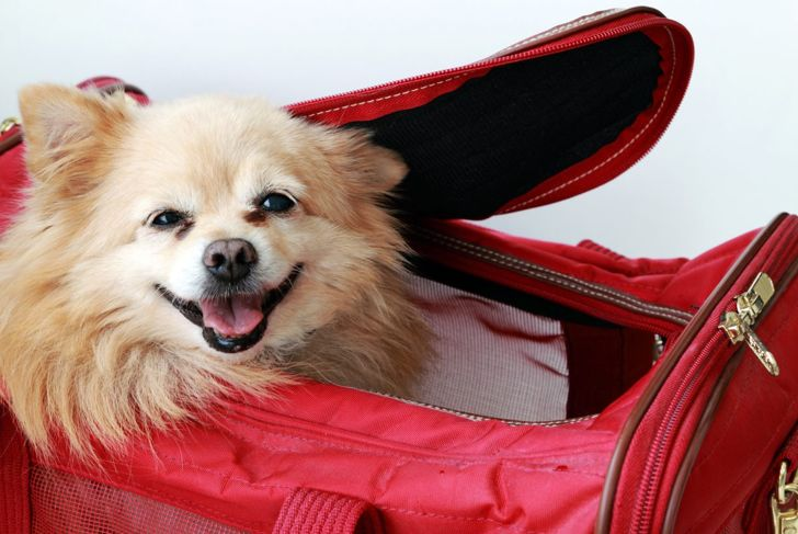 Specially designed crates make traveling with your pet that much easier.