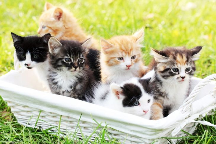 Variety of kittens in basket