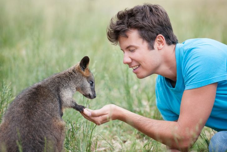 Man interacting with young wallaby, hand out