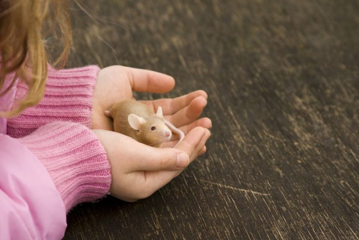child holding pet mouse