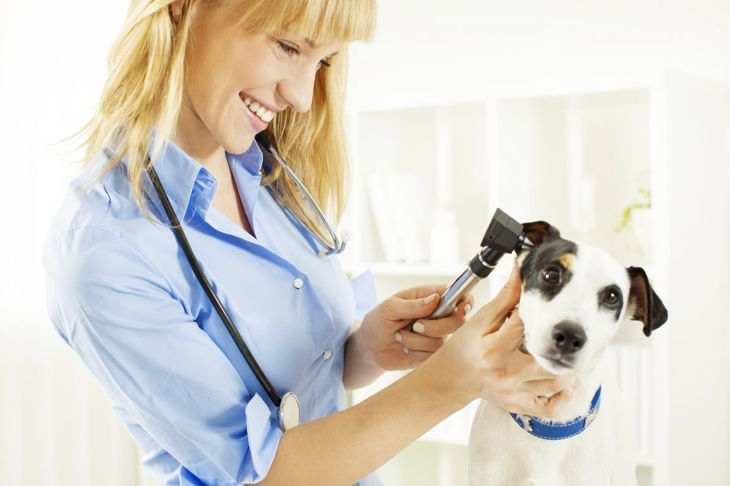 Frequent trips to the vet are not necessary with these dogs