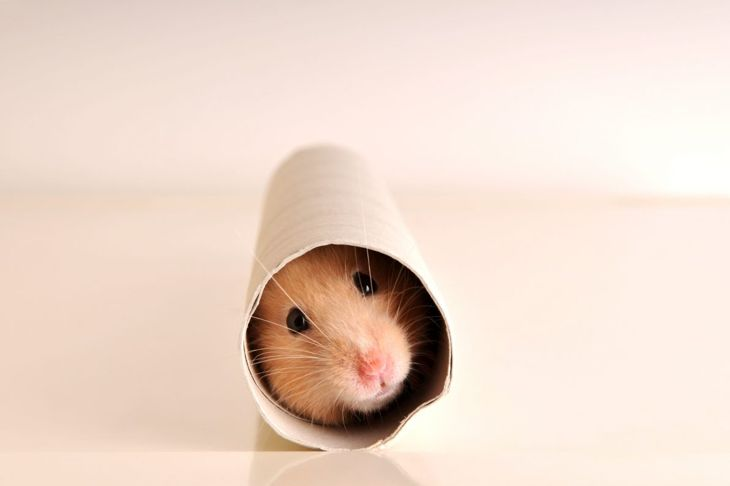 Hiding in a toilet paper roll