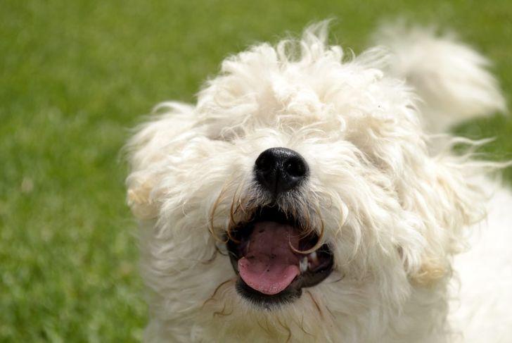 barking attention behavior