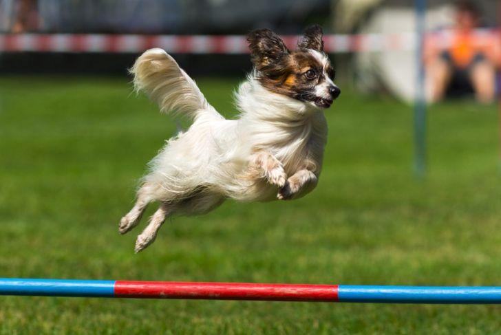 training agility course
