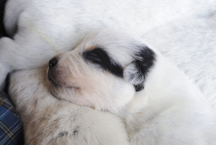 deafness conditions kidneys eye puppy