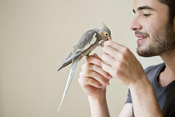 indoor parakeet