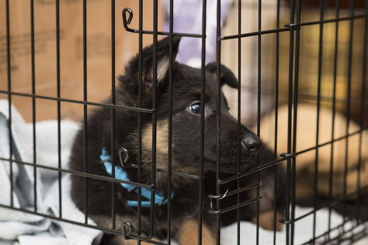 Never keep your dog in the crate longer than they are comfortable.