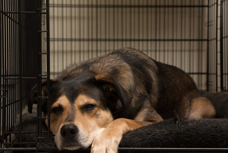 Your dog will come to recognize the crate as their bed.