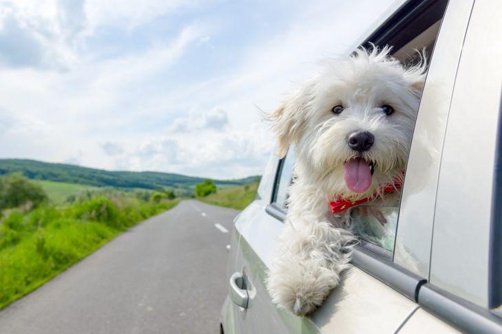 hardy dog adaptable