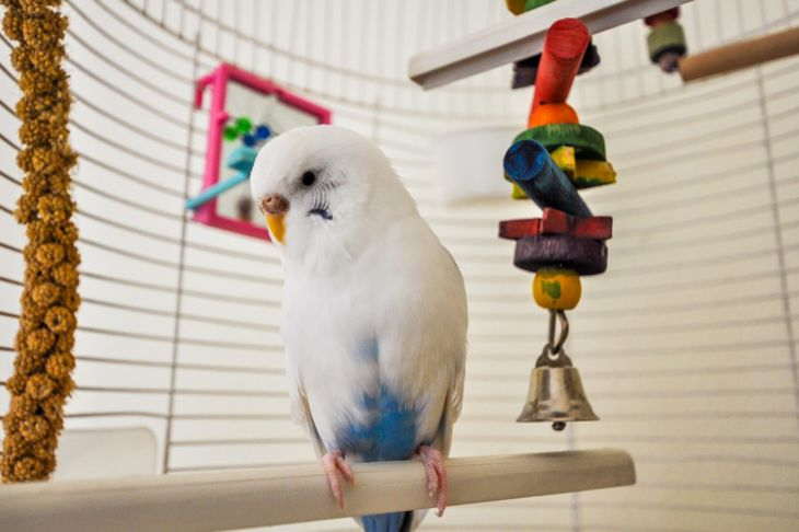 health issues in parakeets