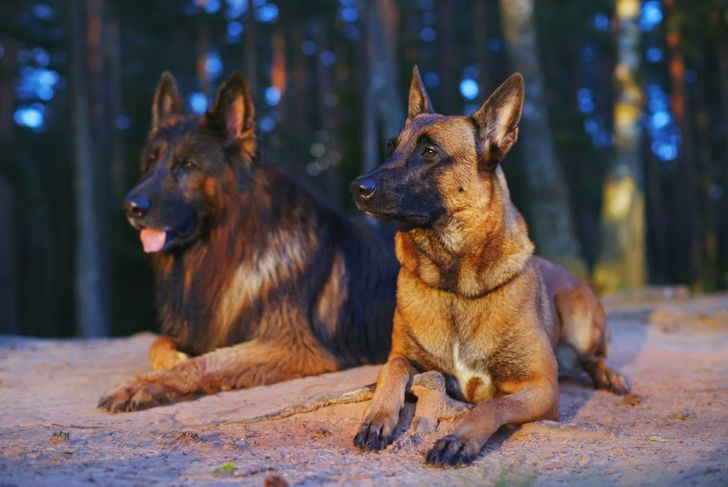 Two different shepherds
