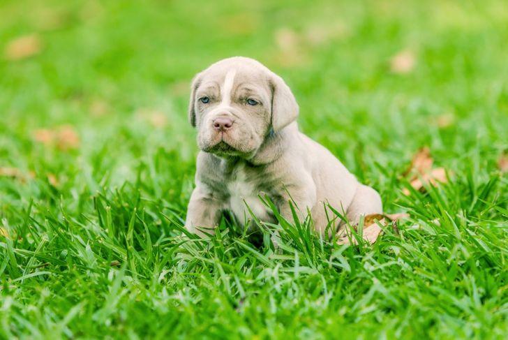 train puppy neo