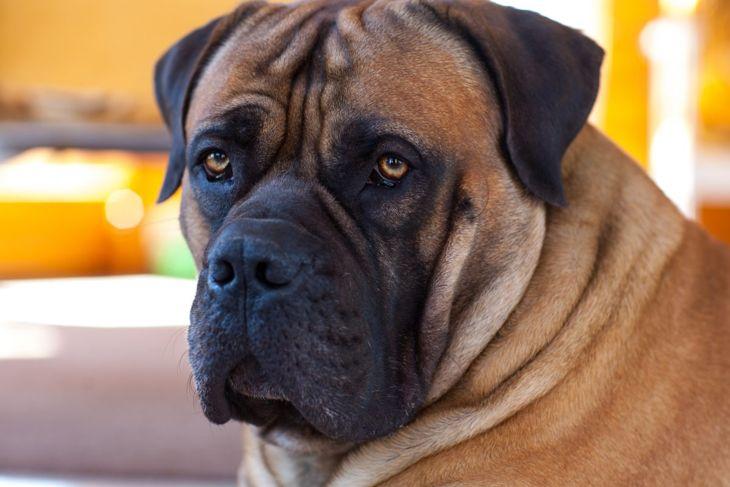 leash bark mouthiness