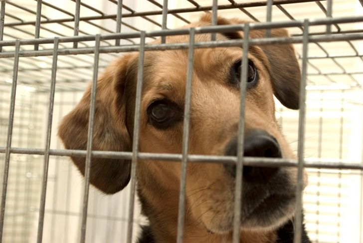 Make sure your dog is happy being in the crate before you leave the room.