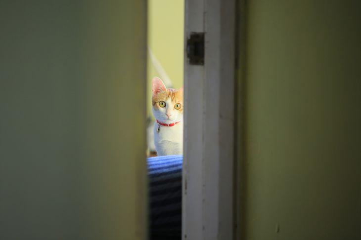 cat behind the door