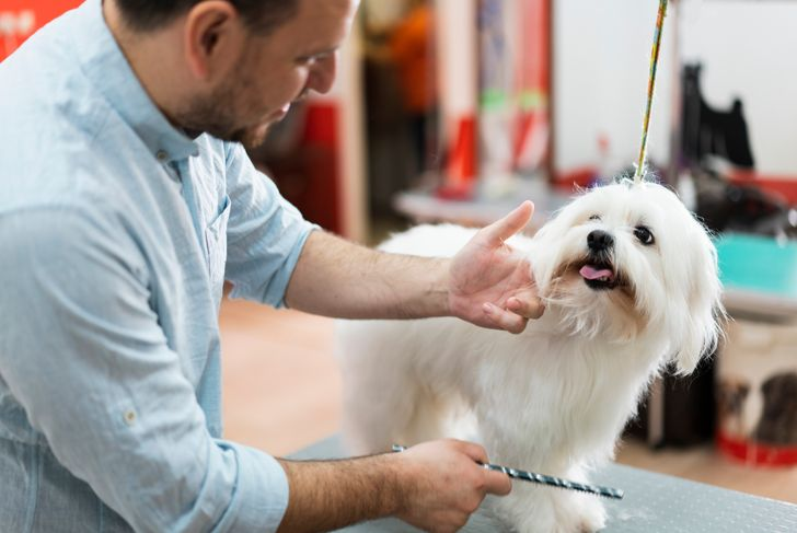 Male Caucasian ethnicity pet groomer taking care of a dog in his Pet grooming salon.