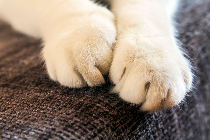 Cat paws closeup