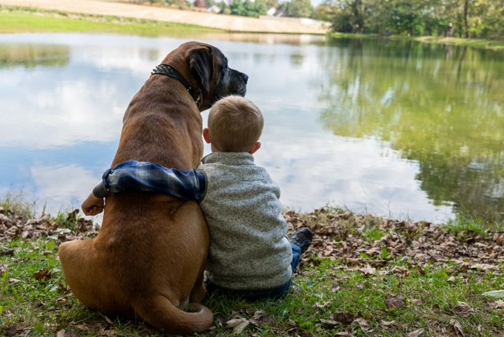 boy with an English Mastiff dog