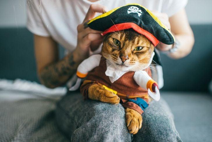 kitten in pirate costume.
