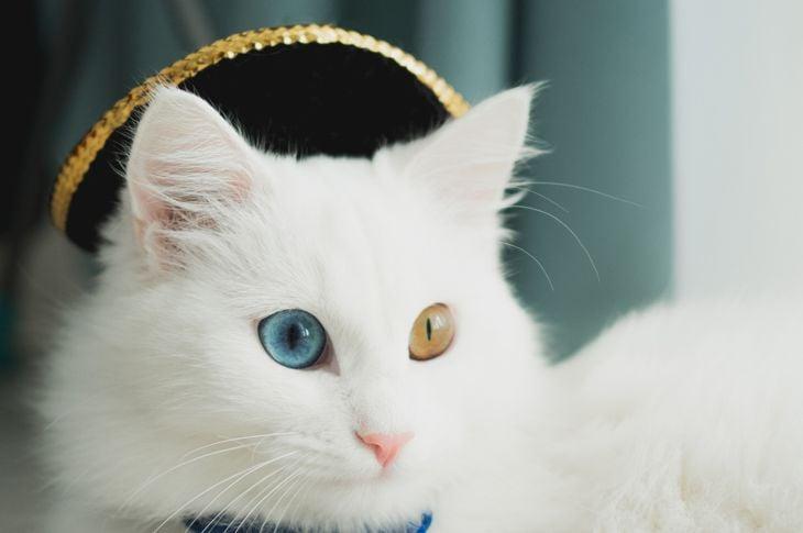white furry cat in a cowboy hat