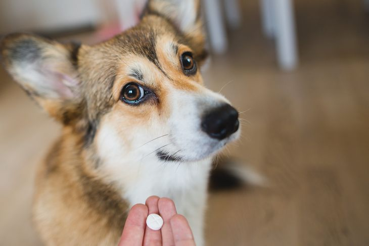 owner giving a pill to a dog.