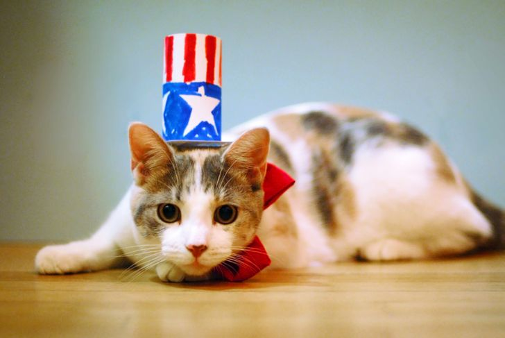 A cat with a patriotic costume