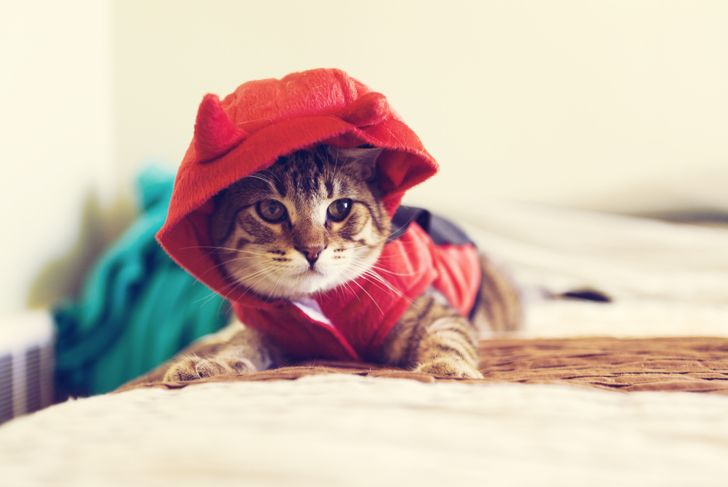 Cat in devil costume