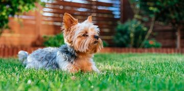 A Guide to Terrier Mixes