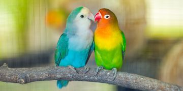 Colorful Bird Species That Are Sure to Dazzle