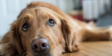 The Symptoms of Kennel Cough