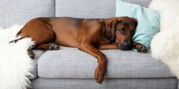 Kennel Cough: Causes and Treatment