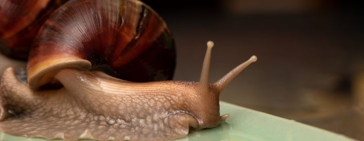 Caring for Your Snail