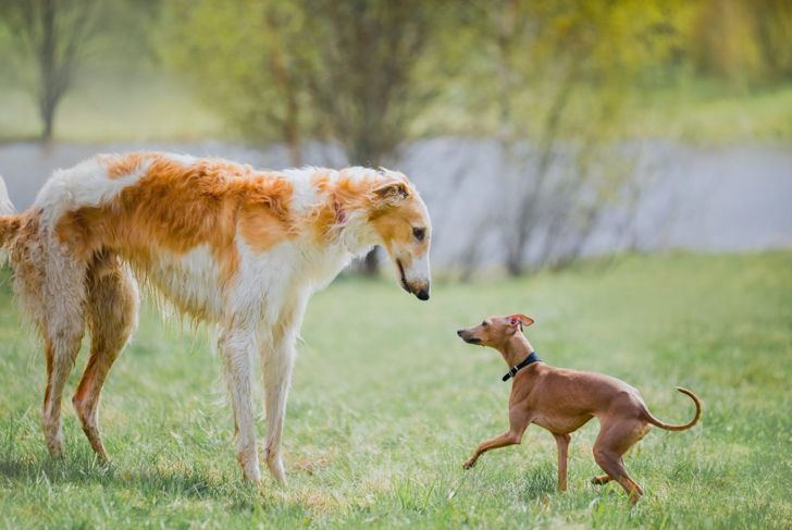 children pets sensitive personality borzoi