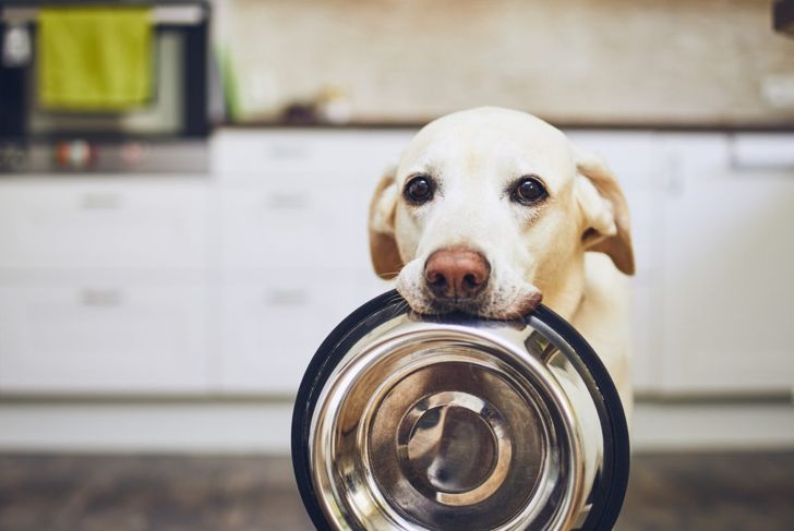 A dog with an empty bowl.