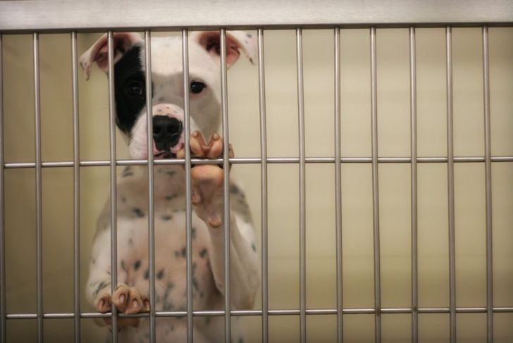 black and white dog in a kennel
