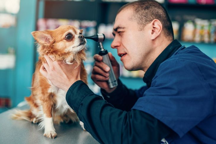 examining outer ears otoscope canine