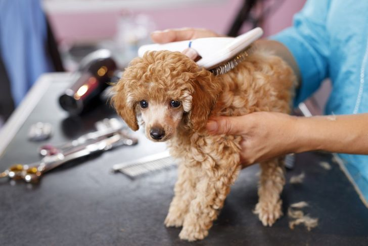 grooming frequent care