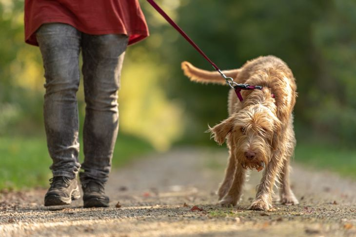 Pressure points irritate dogs' skin