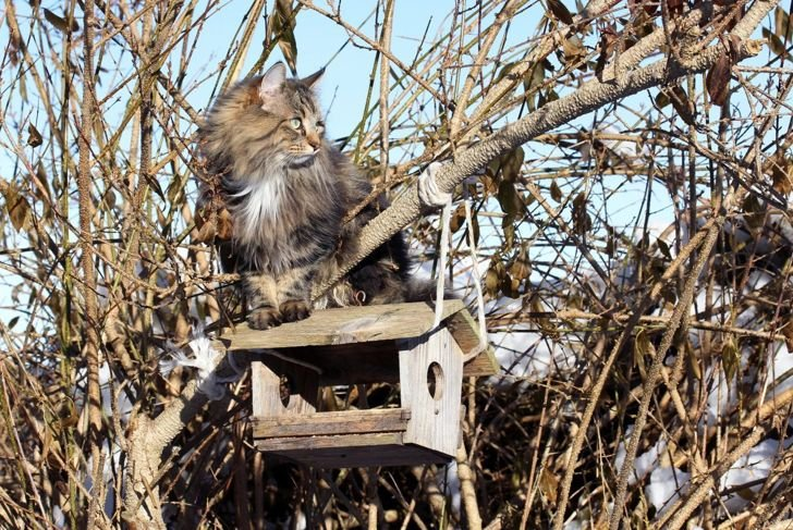 Norwegian forest cat on tree