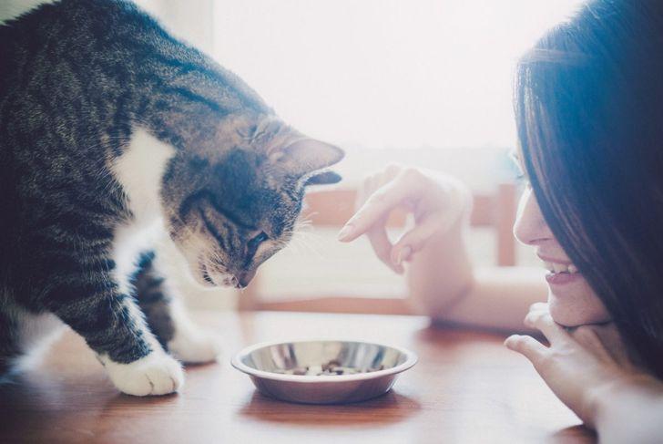 Feeding time for kitty