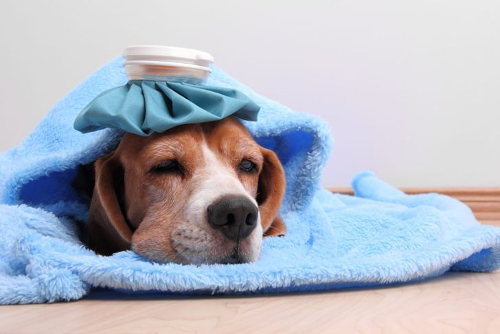 A sick dog.